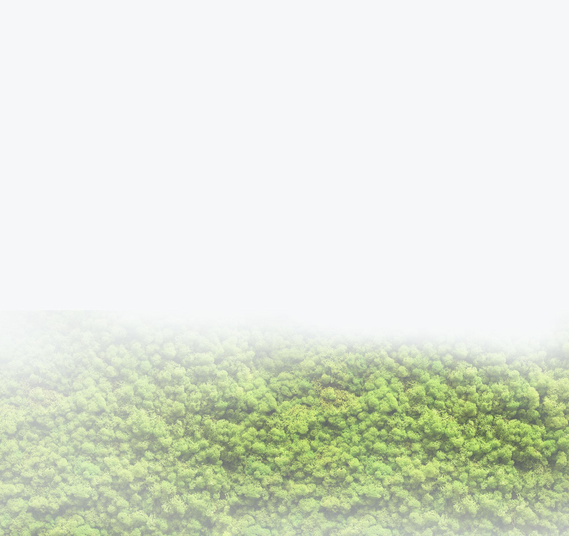 background_green.jpg